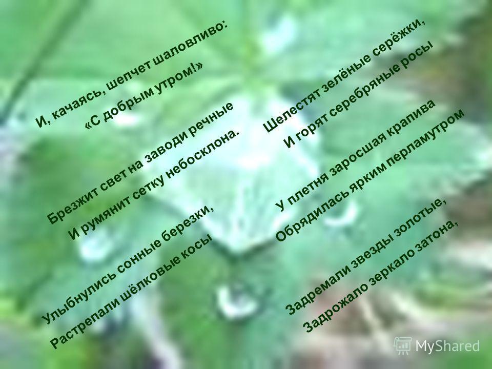 Улыбнулись сонные березки, Растрепали шёлковые косы И, качаясь, шепчет шаловливо: «С добрым утром!» Брезжит свет на заводи речные И румянит сетку небосклона. Шелестят зелёные серёжки, И горят серебряные росы У плетня заросшая крапива Обрядилась ярким