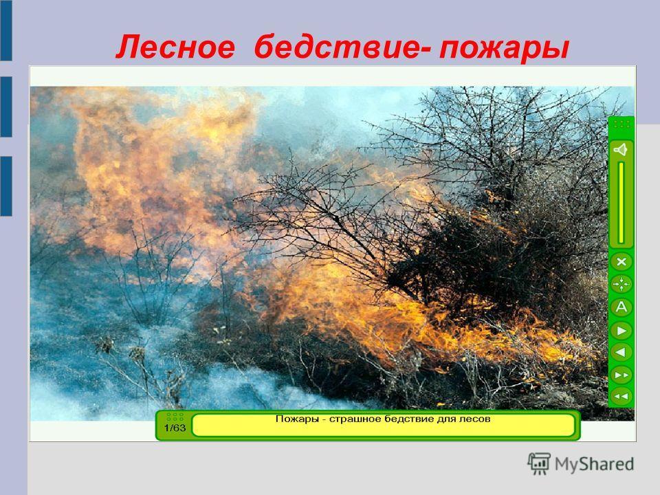 Лесное бедствие- пожары