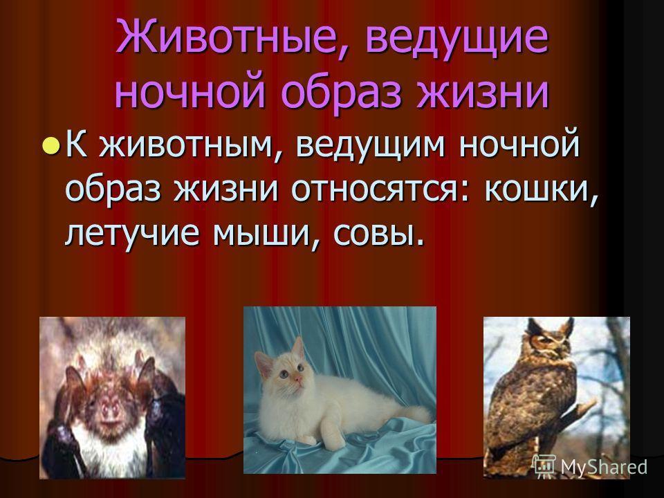 Животные, ведущие ночной образ жизни К животным, ведущим ночной образ жизни относятся: кошки, летучие мыши, совы. К животным, ведущим ночной образ жизни относятся: кошки, летучие мыши, совы.