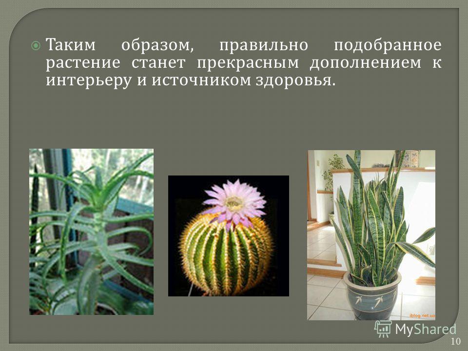 Таким образом, правильно подобранное растение станет прекрасным дополнением к интерьеру и источником здоровья. 10