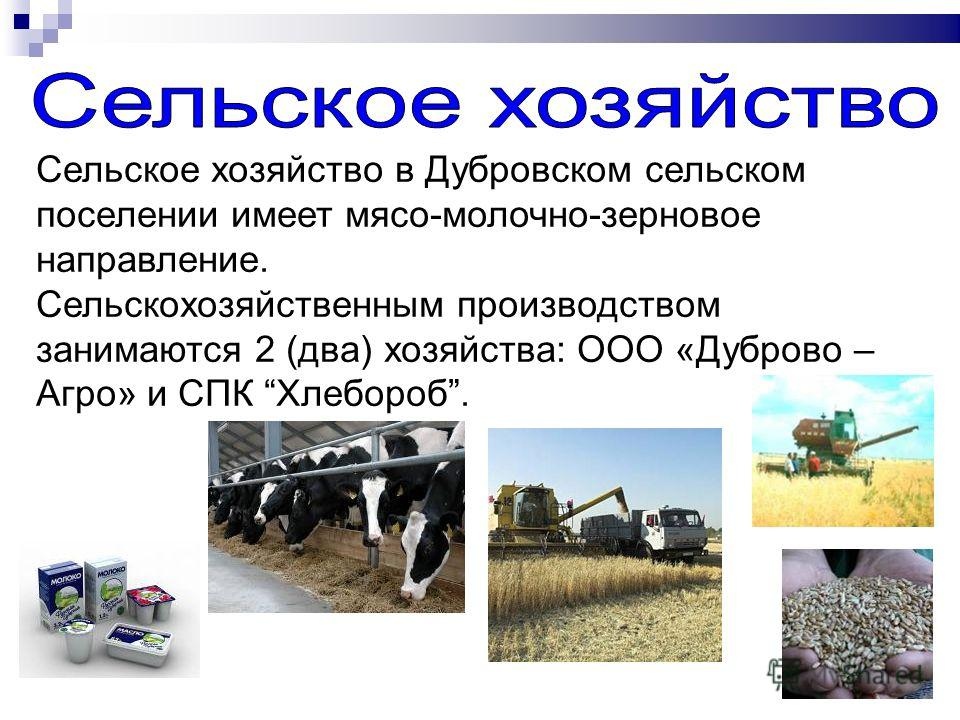 Сельское хозяйство в Дубровском сельском поселении имеет мясо-молочно-зерновое направление. Сельскохозяйственным производством занимаются 2 (два) хозяйства: ООО «Дуброво – Агро» и СПК Хлебороб.