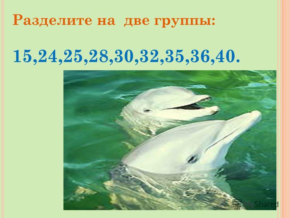 24+7-5+14-19+24-1 = * 42 -Дельфин *56 - Акула *39 - Кит 42