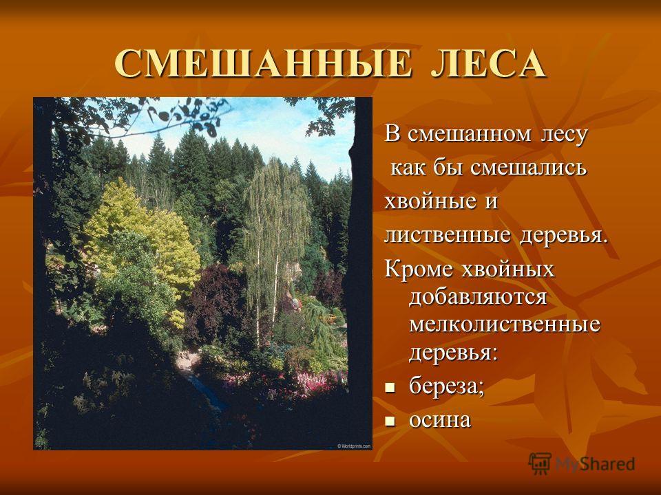 СМЕШАННЫЕ ЛЕСА В смешанном лесу как бы смешались как бы смешались хвойные и лиственные деревья. Кроме хвойных добавляются мелколиственные деревья: береза; береза; осина осина