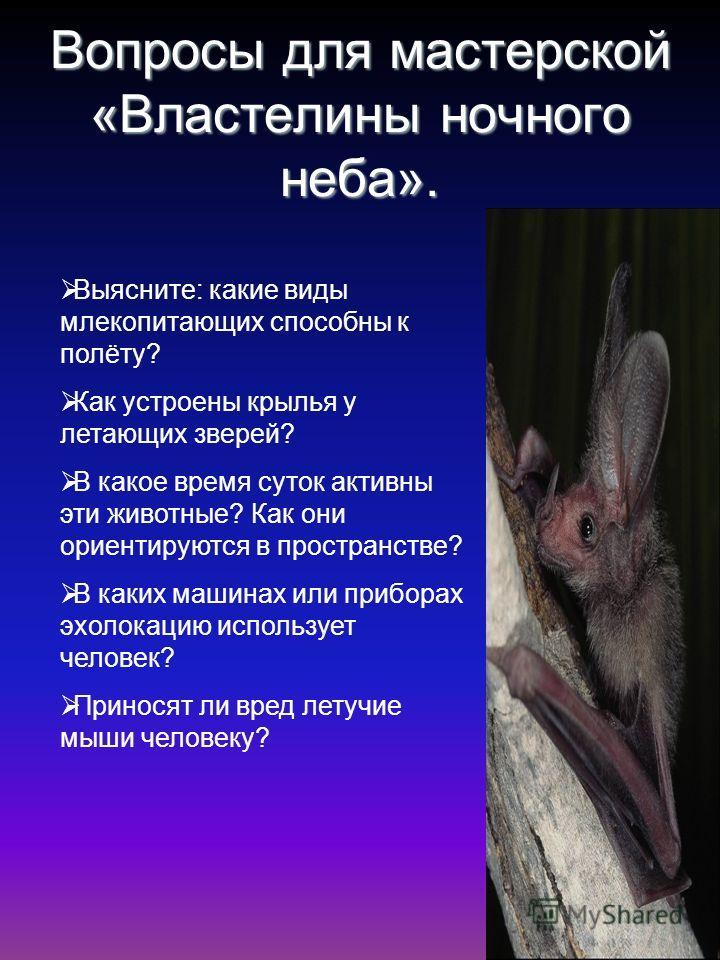 Вопросы для мастерской «Властелины ночного неба». Выясните: какие виды млекопитающих способны к полёту? Как устроены крылья у летающих зверей? В какое время суток активны эти животные? Как они ориентируются в пространстве? В каких машинах или прибора