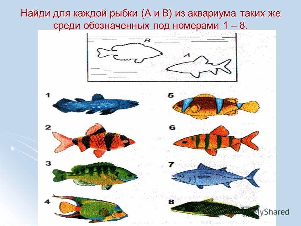 Найди для каждой рыбки (А и В) из аквариума таких же среди обозначенных под номерами 1 – 8.