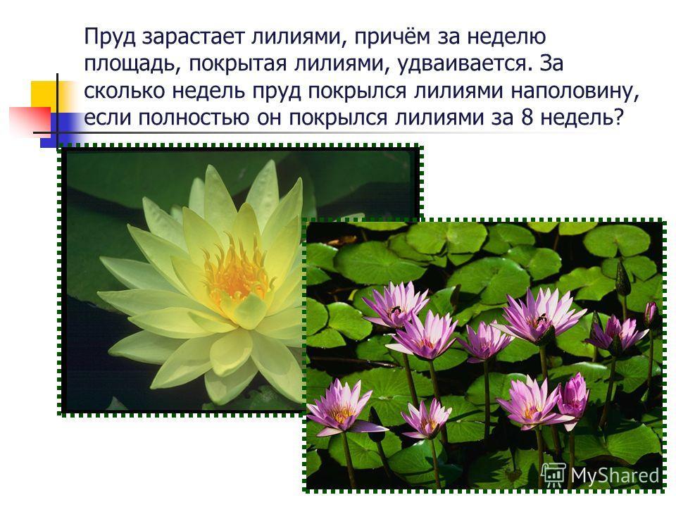 Пруд зарастает лилиями, причём за неделю площадь, покрытая лилиями, удваивается. За сколько недель пруд покрылся лилиями наполовину, если полностью он покрылся лилиями за 8 недель?