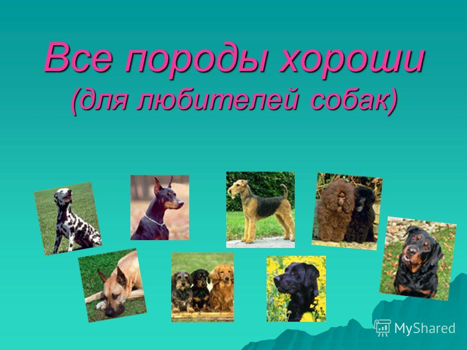 Все породы хороши (для любителей собак)