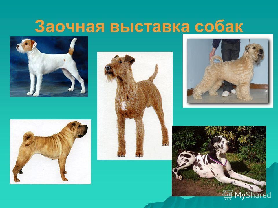 Заочная выставка собак