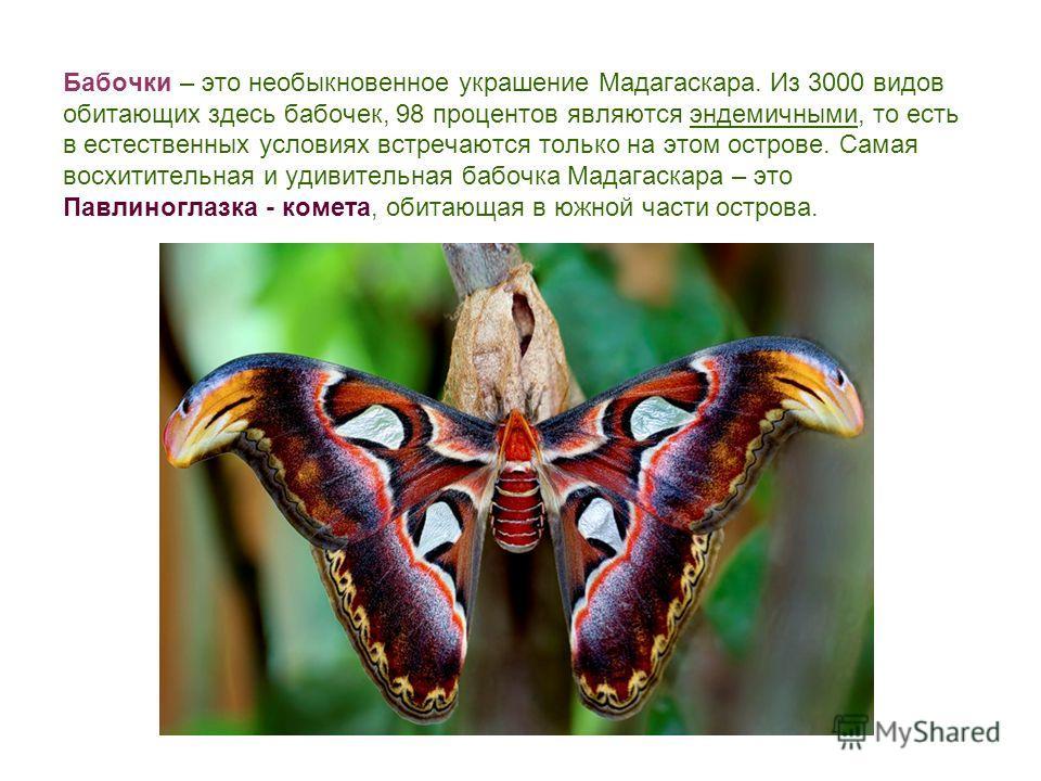 Бабочки – это необыкновенное украшение Мадагаскара. Из 3000 видов обитающих здесь бабочек, 98 процентов являются эндемичными, то есть в естественных условиях встречаются только на этом острове. Самая восхитительная и удивительная бабочка Мадагаскара