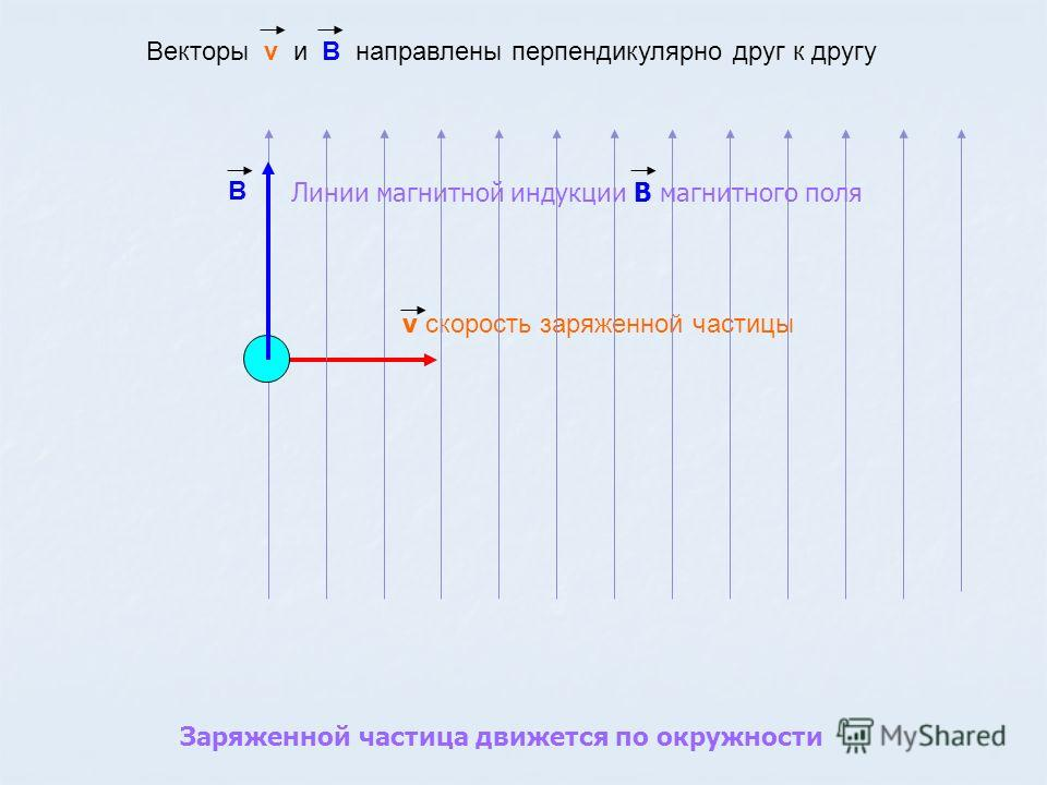 Линии магнитной индукции В магнитного поля Векторы v и В направлены перпендикулярно друг к другу v скорость заряженной частицы Заряженной частица движется по окружности В