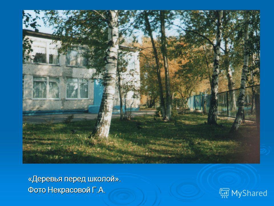 «Деревья перед школой». Фото Некрасовой Г.А.