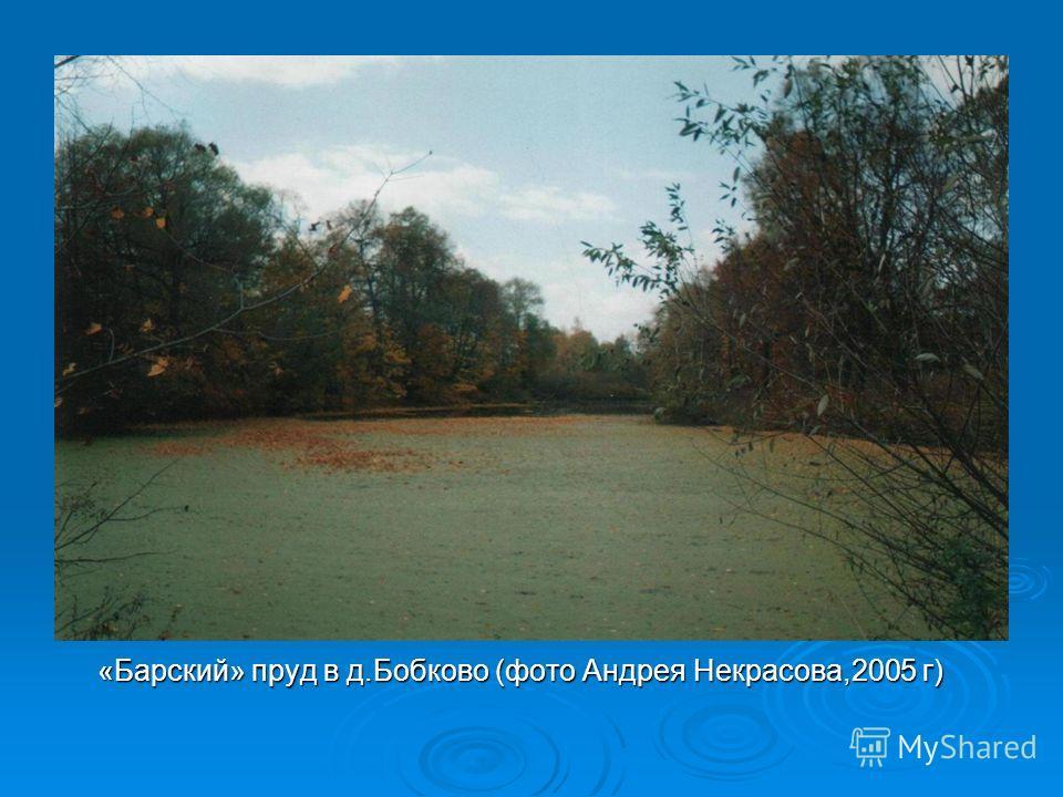 «Барский» пруд в д.Бобково (фото Андрея Некрасова,2005 г) «Барский» пруд в д.Бобково (фото Андрея Некрасова,2005 г)
