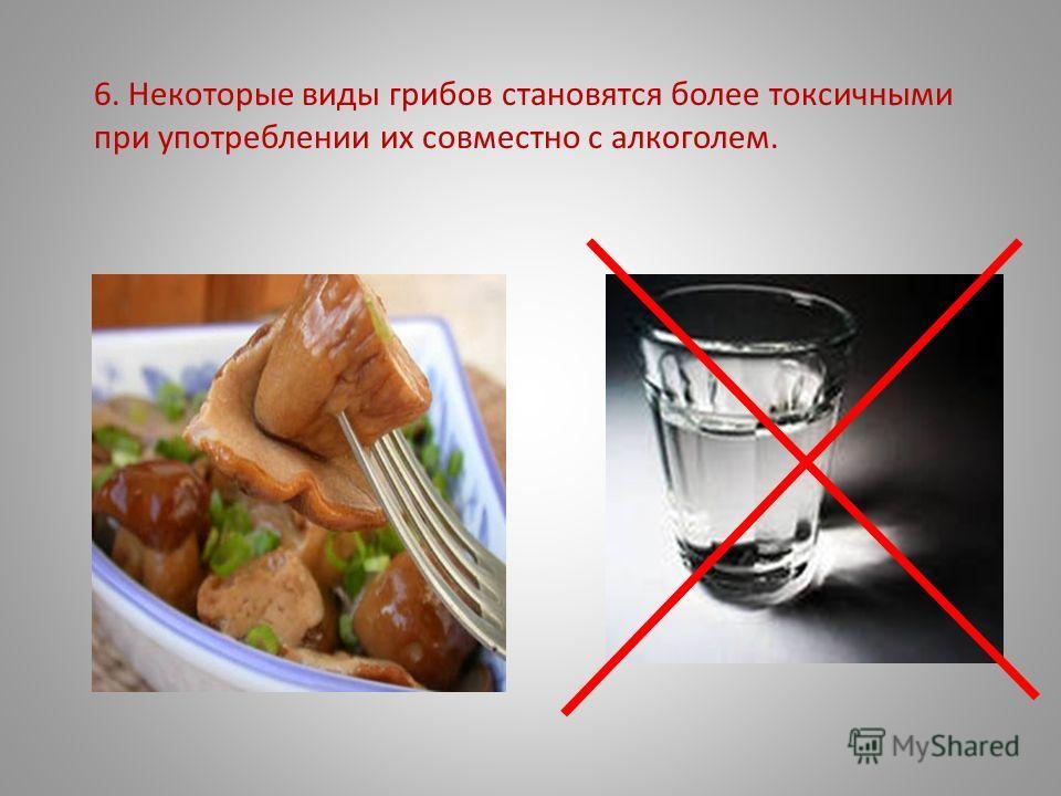 6. Некоторые виды грибов становятся более токсичными при употреблении их совместно с алкоголем.