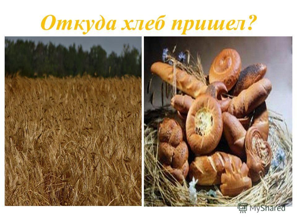 Откуда хлеб пришел?