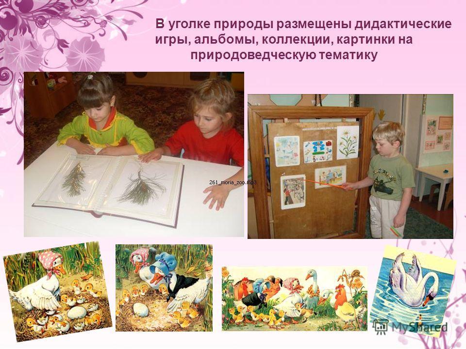 В уголке природы размещены дидактические игры, альбомы, коллекции, картинки на природоведческую тематику