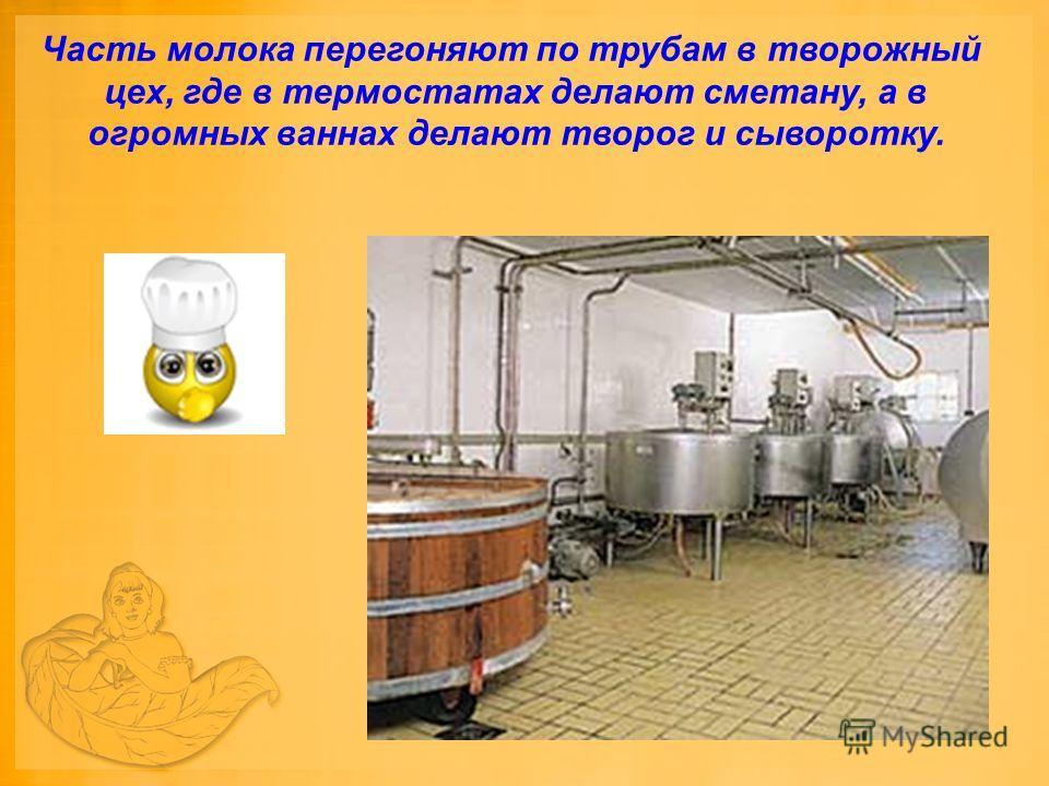 Часть молока перегоняют по трубам в творожный цех, где в термостатах делают сметану, а в огромных ваннах делают творог и сыворотку.