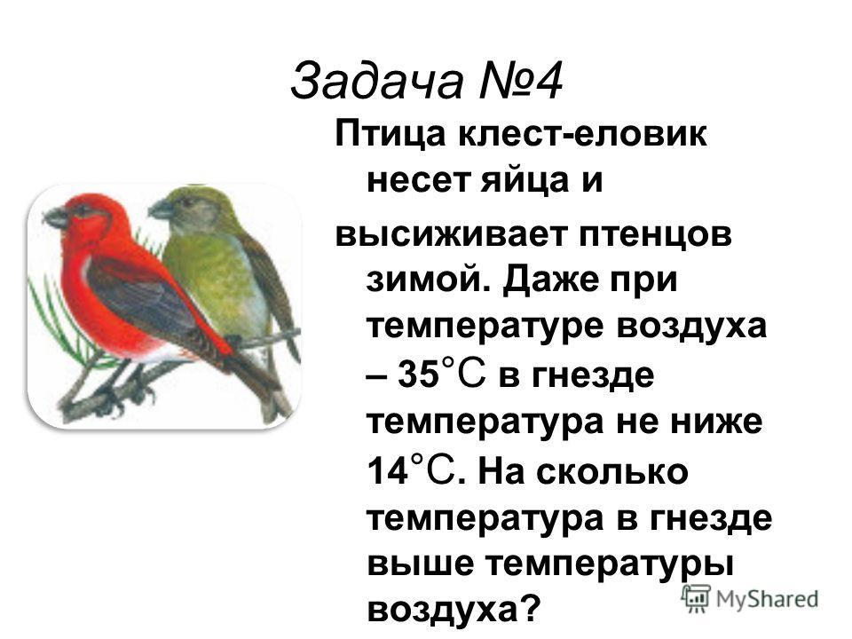 Задача 4 Птица клест-еловик несет яйца и высиживает птенцов зимой. Даже при температуре воздуха – 35 °С в гнезде температура не ниже 14 °С. На сколько температура в гнезде выше температуры воздуха?