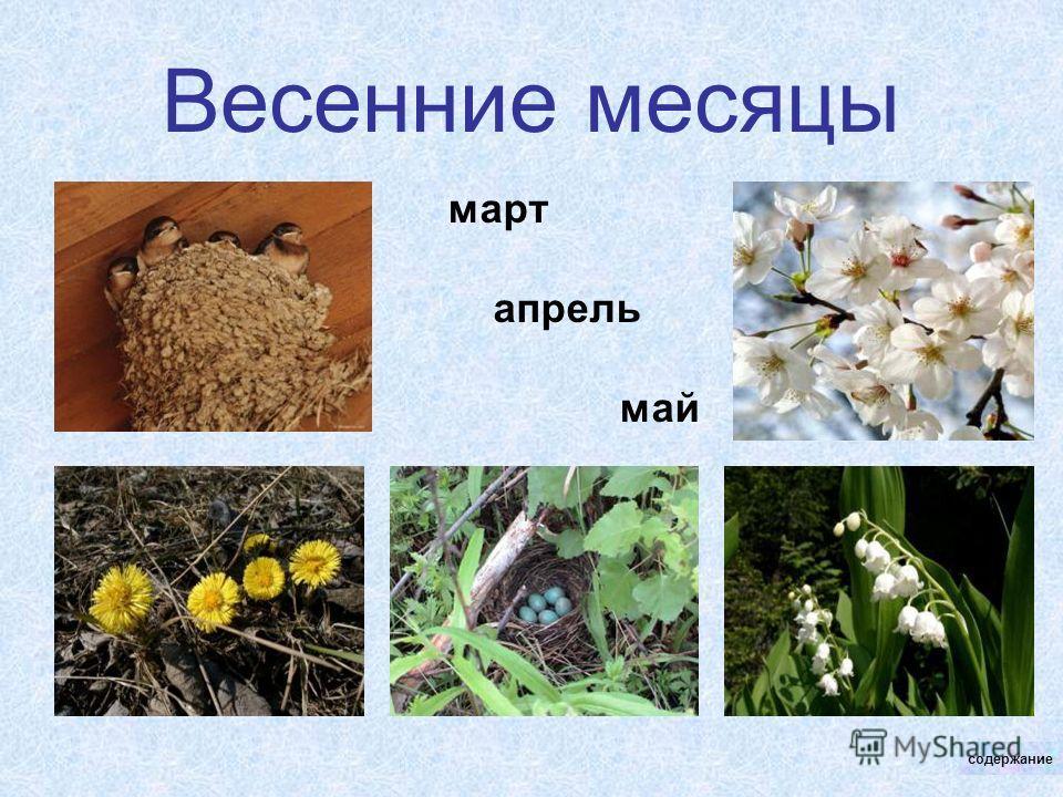 Весенние месяцы март апрель май содержание