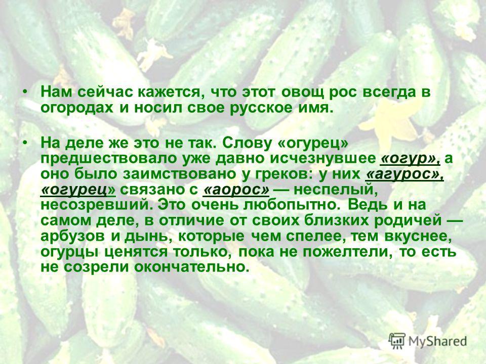 Нам сейчас кажется, что этот овощ рос всегда в огородах и носил свое русское имя. На деле же это не так. Слову «огурец» предшествовало уже давно исчезнувшее «огур», а оно было заимствовано у греков: у них «агурос», «огурец» связано с «аорос» неспелый