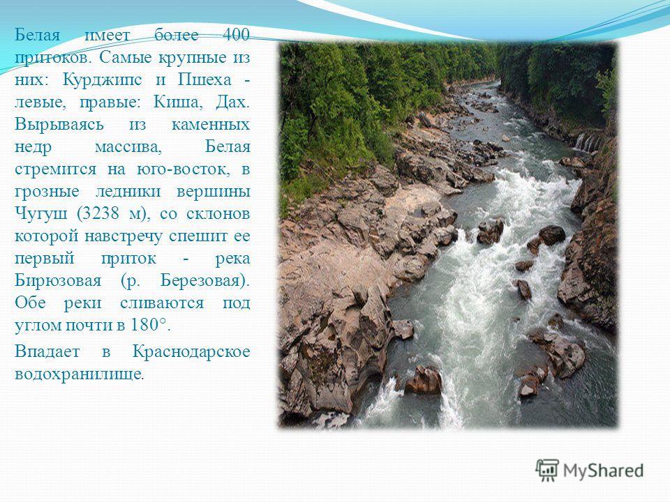Белая имеет более 400 притоков. Самые крупные из них: Курджипс и Пшеха - левые, правые: Киша, Дах. Вырываясь из каменных недр массива, Белая стремится на юго-восток, в грозные ледники вершины Чугуш (3238 м), со склонов которой навстречу спешит ее пер