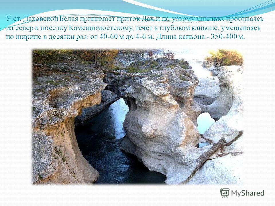У ст. Даховской Белая принимает приток Дах и по узкому ущелью, пробиваясь на север к поселку Каменномостскому, течет в глубоком каньоне, уменьшаясь по ширине в десятки раз: от 40-60 м до 4-6 м. Длина каньона - 350-400 м.