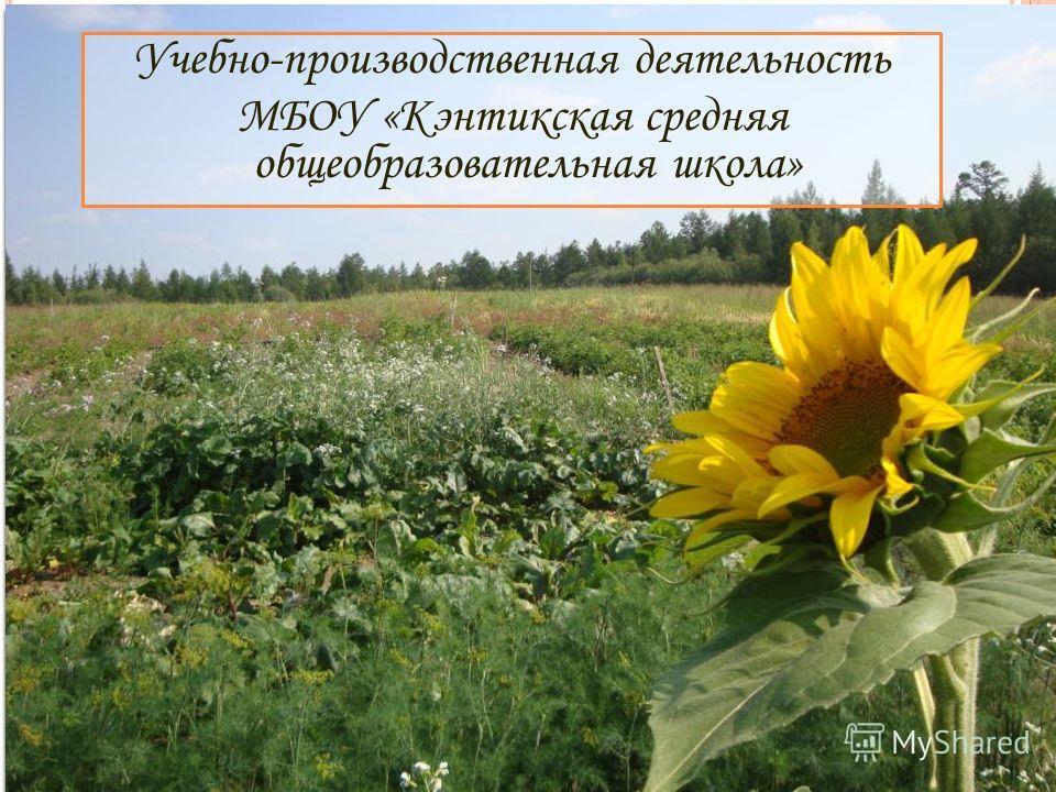 Учебно-производственная деятельность МБОУ «Кэнтикская средняя общеобразовательная школа»