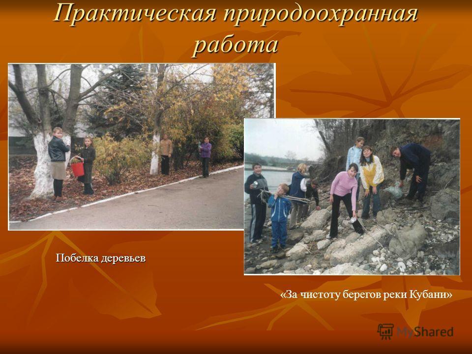 Практическая природоохранная работа «За чистоту берегов реки Кубани» Побелка деревьев