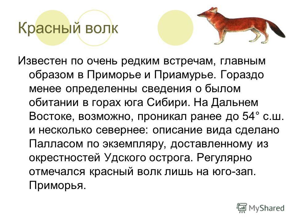 Красный волк Известен по очень редким встречам, главным образом в Приморье и Приамурье. Гораздо менее определенны сведения о былом обитании в горах юга Сибири. На Дальнем Востоке, возможно, проникал ранее до 54° с.ш. и несколько севернее: описание ви
