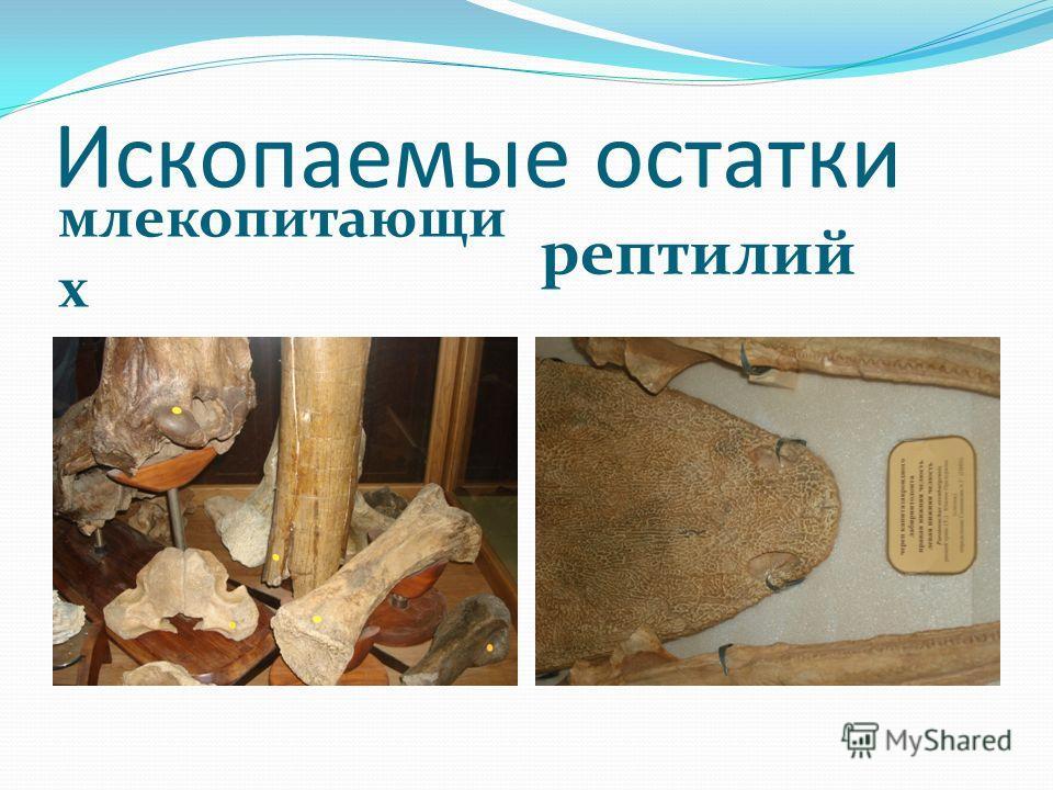 Ископаемые остатки млекопитающи х рептилий