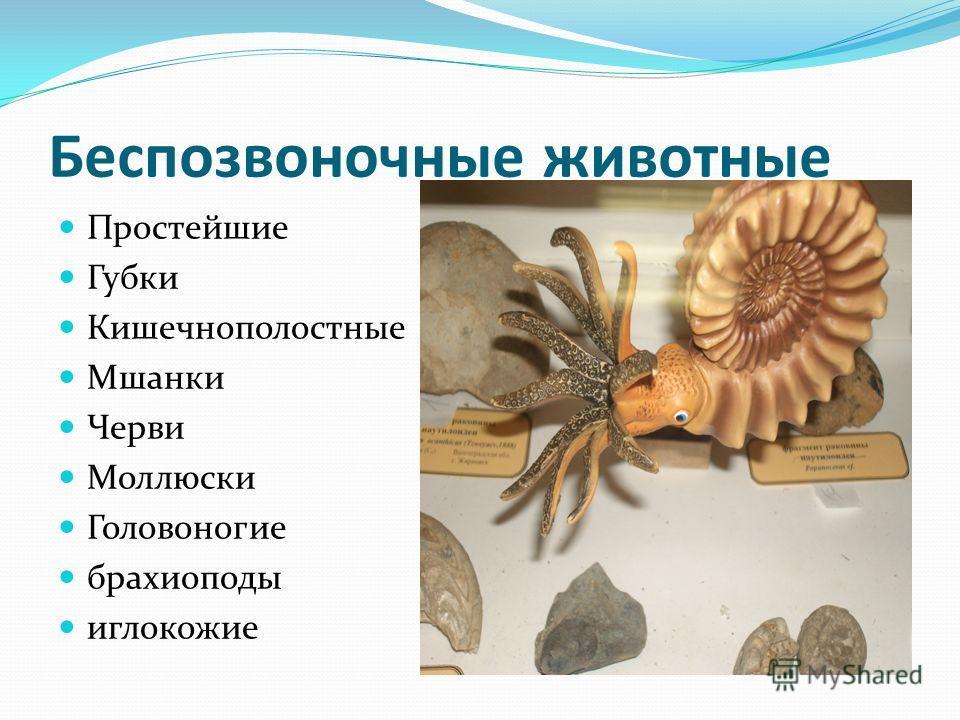 Беспозвоночные животные Простейшие Губки Кишечнополостные Мшанки Черви Моллюски Головоногие брахиоподы иглокожие