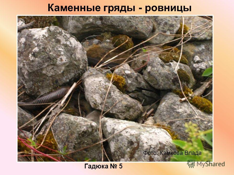 Каменные гряды - ровницы Фото: Камкова Влада Гадюка 5