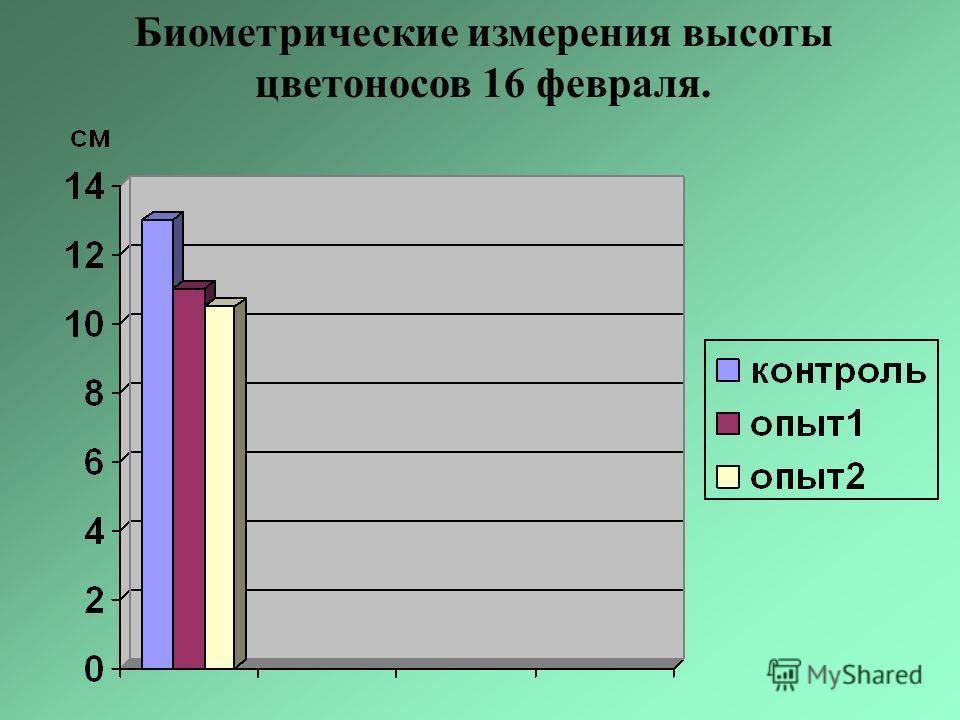 Биометрические измерения высоты цветоносов 16 февраля.