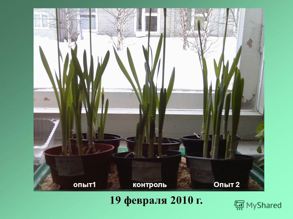 опыт1 контроль Опыт 2 19 февраля 2010 г.