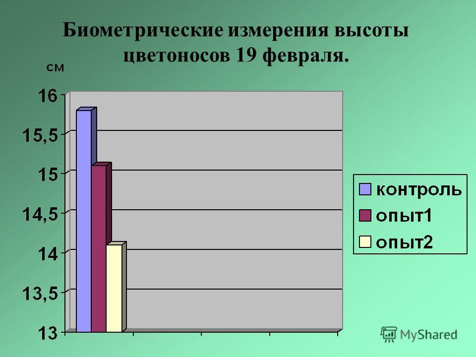 Биометрические измерения высоты цветоносов 19 февраля.