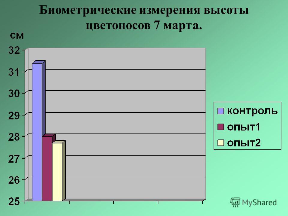 Биометрические измерения высоты цветоносов 7 марта.