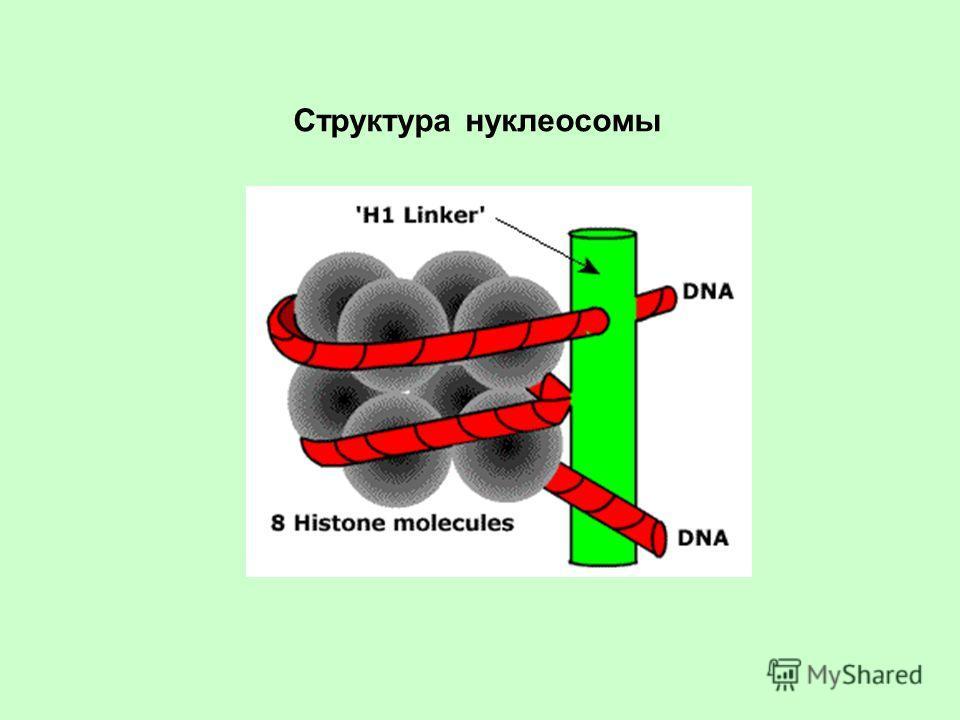 Структура нуклеосомы