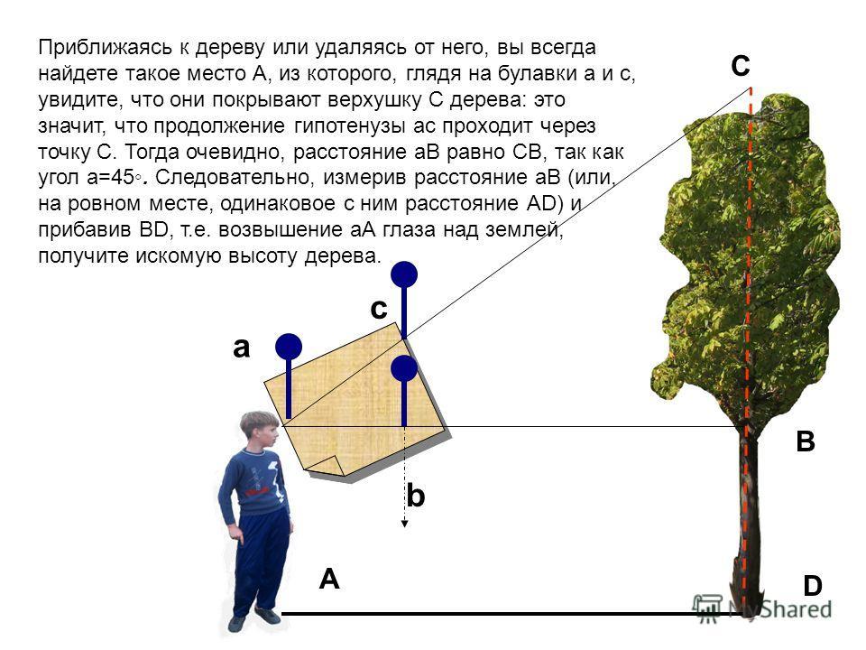 c a b A D C B Приближаясь к дереву или удаляясь от него, вы всегда найдете такое место А, из которого, глядя на булавки а и с, увидите, что они покрывают верхушку С дерева: это значит, что продолжение гипотенузы ас проходит через точку С. Тогда очеви