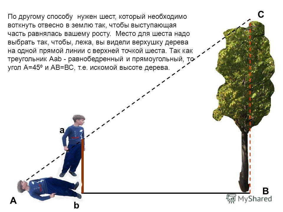 a b B C A По другому способу нужен шест, который необходимо воткнуть отвесно в землю так, чтобы выступающая часть равнялась вашему росту. Место для шеста надо выбрать так, чтобы, лежа, вы видели верхушку дерева на одной прямой линии с верхней точкой