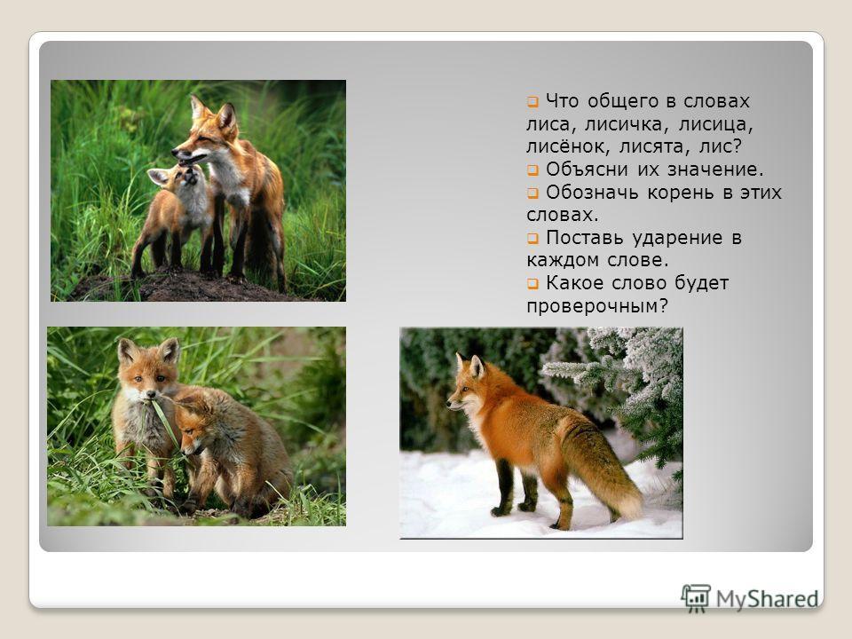 Что общего в словах лиса, лисичка, лисица, лисёнок, лисята, лис? Объясни их значение. Обозначь корень в этих словах. Поставь ударение в каждом слове. Какое слово будет проверочным?