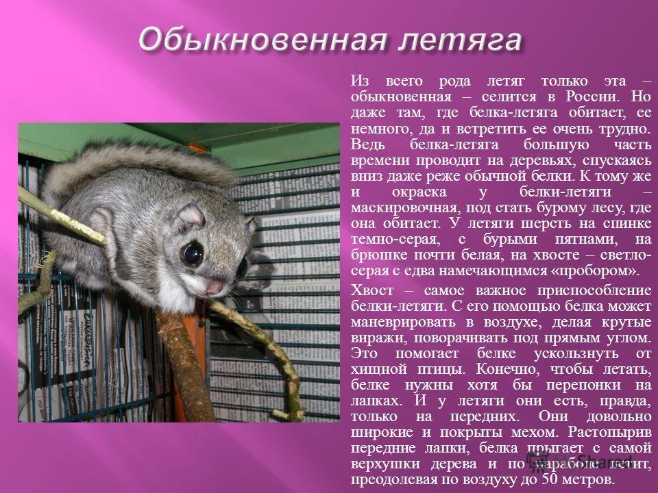 Сарган густо населяет Черное море. И тем не менее наблюдателей и рыбаков сарган постоянно удивляет. Сарганы держатся стаями и ведут себя так, что ими можно подолгу любоваться. Сарган плавает недалеко от поверхности. Иногда он вдруг стремительно несет