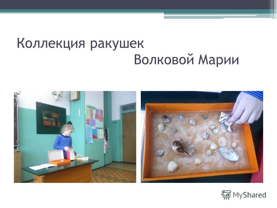 Коллекция ракушек Волковой Марии