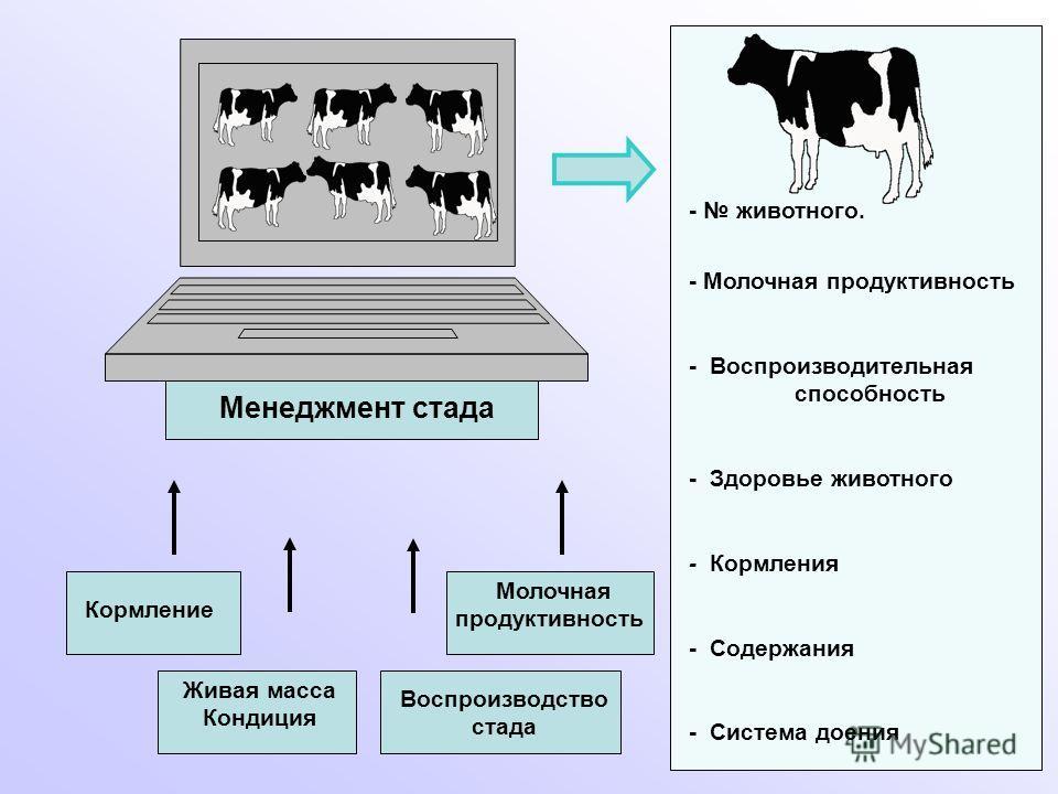 Менеджмент стада Кормление Молочная продуктивность Живая масса Кондиция Воспроизводство стада - животного. - Молочная продуктивность - Воспроизводительная способность - Здоровье животного - Кормления - Содержания - Система доения
