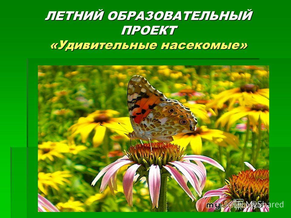 ЛЕТНИЙ ОБРАЗОВАТЕЛЬНЫЙ ПРОЕКТ «Удивительные насекомые»
