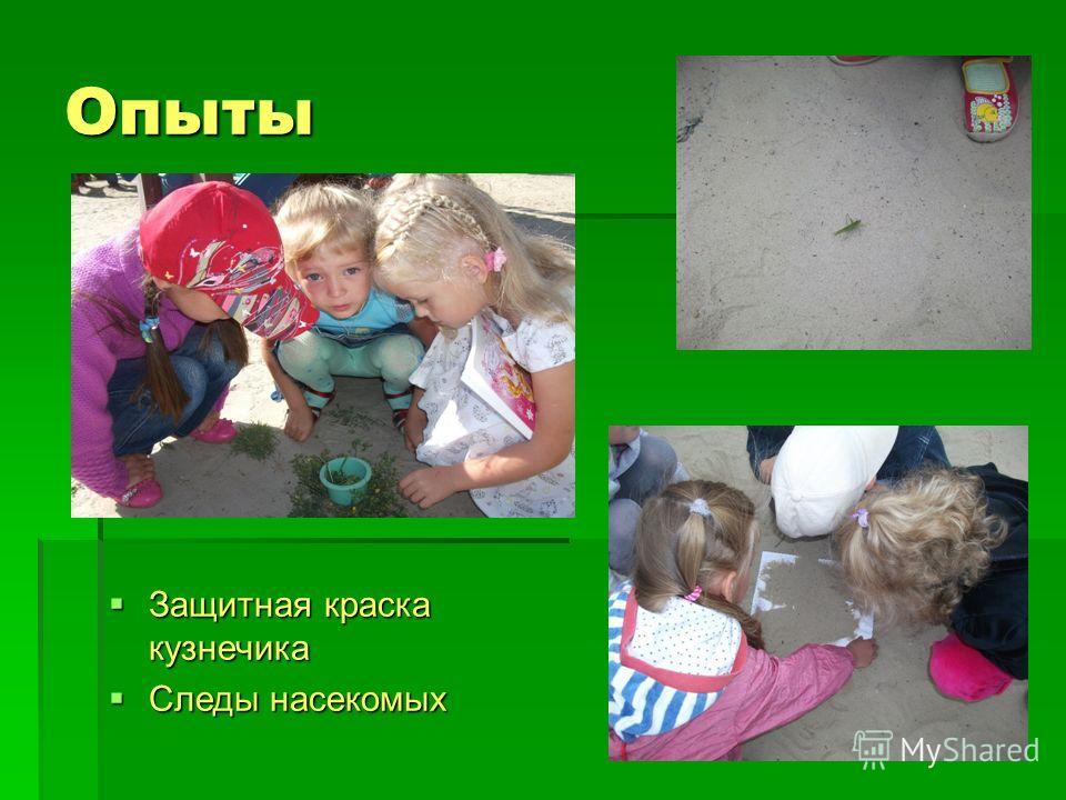 Опыты Защитная краска кузнечика Защитная краска кузнечика Следы насекомых Следы насекомых