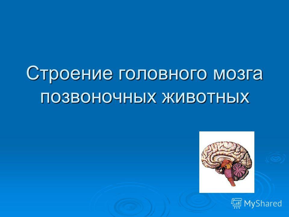 Строение головного мозга позвоночных животных
