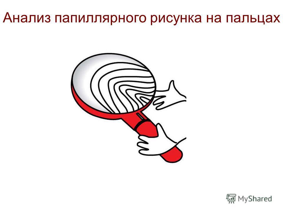 Анализ папиллярного рисунка на пальцах