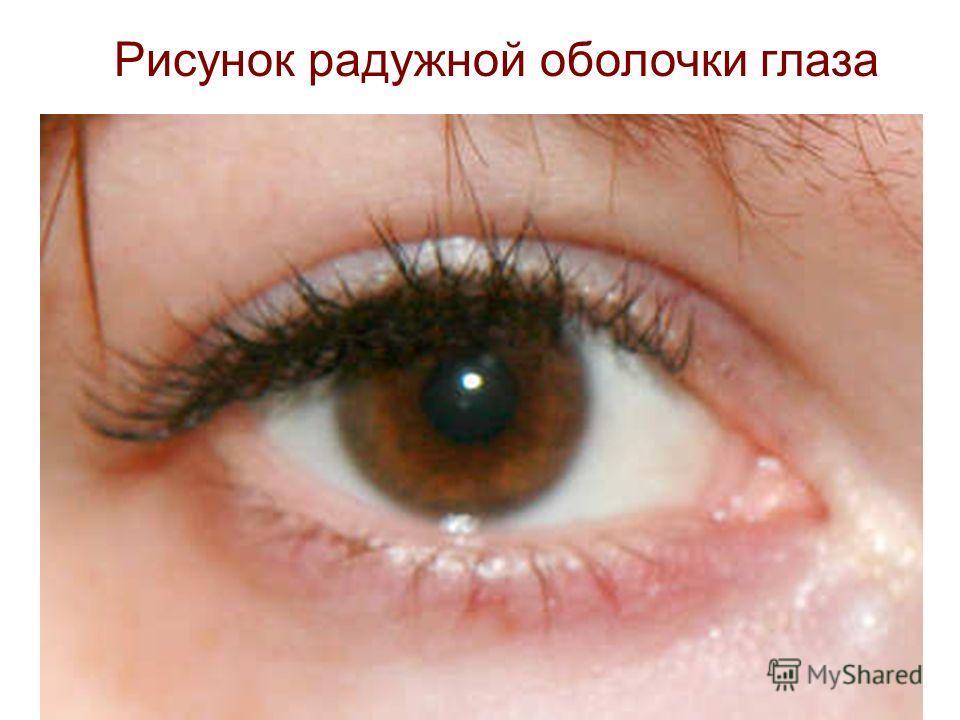Рисунок радужной оболочки глаза