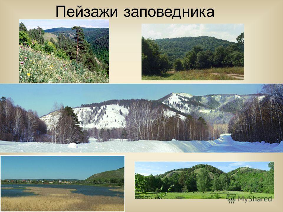 Еще в конце 18 века на Самарской Луке произрастали вековые и дремучие леса. Это были дубово-липовые и сосново-дубовые леса, по склонам сосновые боры, а по широким днищам древних долин – вековые березняки. Но эти леса впоследствии были пройдены многок