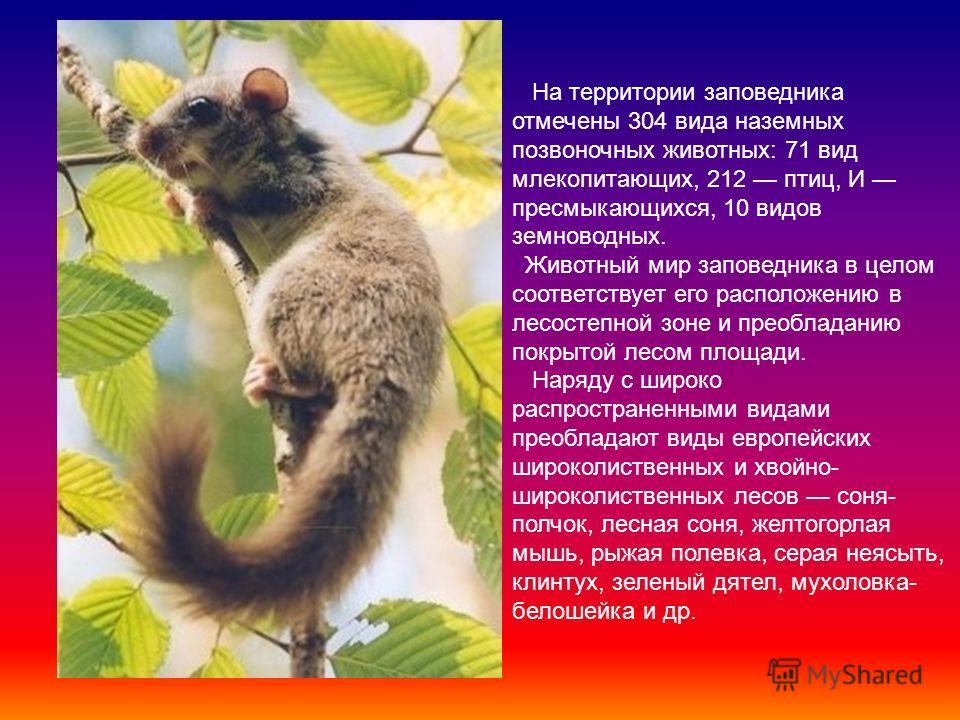Животный Мир Заповедника