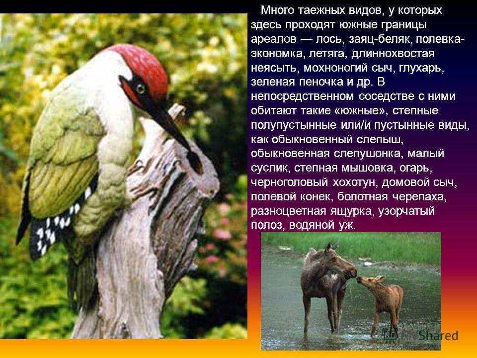 На территории заповедника отмечены 304 вида наземных позвоночных животных: 71 вид млекопитающих, 212 птиц, И пресмыкающихся, 10 видов земноводных. Животный мир заповедника в целом соответствует его расположению в лесостепной зоне и преобладанию покры